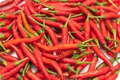 Många röd chili, varmt och kryddigt på tabellen för att välja och att laga mat Fotografering för Bildbyråer