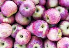 Många röda äpplen Royaltyfri Bild