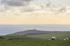 Många sheeps på lantgården Arkivbild