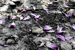 Många sidor av blomman vissnar på jordning Royaltyfria Foton