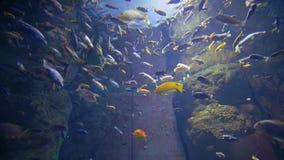 Många simmar den olika härliga fisken i akvarium på bakgrunden av solljus
