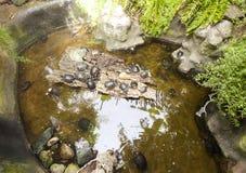 Många sköldpaddor i vattnet och på kust Royaltyfri Bild