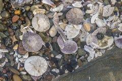 Många skal på den tropiska stranden Arkivfoton