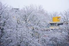 Många snöar träd med en gul byggnad i bakgrunden Royaltyfri Foto