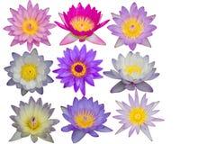 Många sorter av textur för lotusblommablommor som isoleras på vit bakgrund Royaltyfri Bild