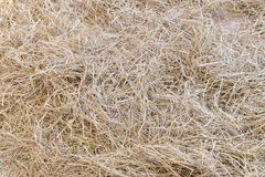 Många sugrör för bruk som tapeten Arkivfoto
