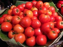 Många tomater i grönsakmarknad Royaltyfria Bilder