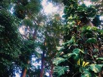 Många träd Royaltyfria Foton