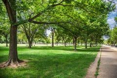 Många träd med skugga och solljus i Washington DC parkerar Royaltyfri Bild