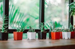Många typer av kaktuns dekoreras i kafét royaltyfria bilder