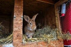 Många unga kaniner i ett skjul En grupp av små kaniner matar in ladugårdgården Påsksymbol Royaltyfria Foton