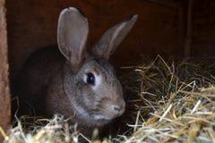 Många unga kaniner i ett skjul En grupp av små kaniner matar in ladugårdgården Påsksymbol Arkivbilder