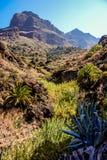 Många växter i kanjonen av Masca arkivbild