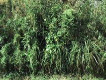 Många växter i tropisk skog Arkivbild