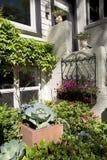 Många växter som växer runt om hus Arkivbilder