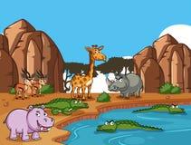 Många vilda djur vid dammet Arkivfoton