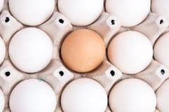Många vit och ett brunt ägg Royaltyfria Foton