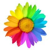 mångfärgad blomma royaltyfri bild