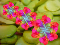 mångfärgad blomma Arkivbilder
