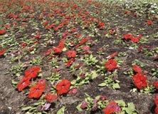 Mångfärgad blomsterrabatt på en lawn royaltyfri fotografi
