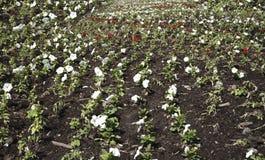 Mångfärgad blomsterrabatt på en lawn royaltyfri foto