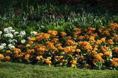 Mångfärgad blomsterrabatt på en lawn Skjutit horisontal Litet FATTANDE arkivbilder