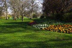 Mångfärgad blomsterrabatt på en lawn Skjutit horisontal Litet FATTANDE royaltyfri foto