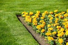Mångfärgad blomsterrabatt på en lawn Skjutit horisontal Trädgård som dekoreras med blommor arkivfoto