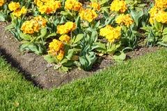 Mångfärgad blomsterrabatt på en lawn Skjutit horisontal Trädgård som dekoreras med blommor royaltyfria foton