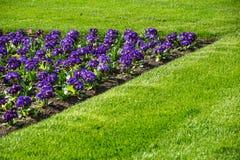 Mångfärgad blomsterrabatt på en lawn Skjutit horisontal Trädgård som dekoreras med blommor royaltyfria bilder