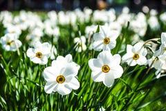 Mångfärgad blomsterrabatt på en lawn Skjutit horisontal Trädgård som dekoreras med blommor royaltyfri foto
