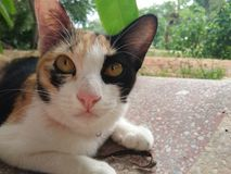 Mångfärgad katt arkivbild