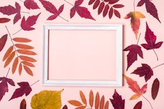 Mångfärgad ram för höstsidor på rosa pastellfärgad bakgrund Hello höstbegrepp fotografering för bildbyråer