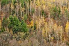 Mångfärgad skog i höstnedgången royaltyfria bilder