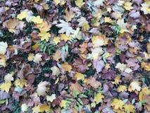 Mångfärgad stupad sidabakgrund Royaltyfria Foton