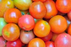mångfärgad tomat Royaltyfria Foton