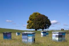 mångfärgade bikupar Arkivfoto
