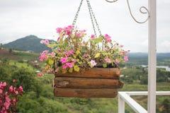Mångfärgade blommapetunior, i att hänga vide- korgar på metall arkivfoton