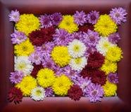 Mångfärgade blommor inom en träram Stilfullt foto för ferier och inbjudningar Fotografering för Bildbyråer