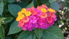 mångfärgade mycket små blommor Arkivfoto