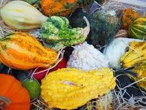 Mångfärgade orange och gröna pumpor på sugrör garnering halloween Arkivfoto