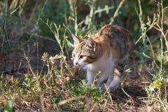 Mångfärgade prickiga kattungejakter i det fria Royaltyfri Foto