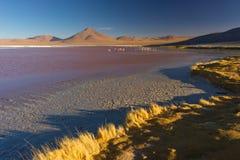Mångfärgade Salt Lake med flamingo på bolivianska Anderna Arkivfoto