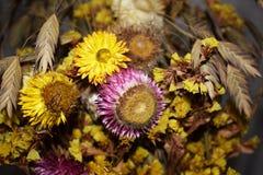 mångfärgade torkade blommor i en bukett Royaltyfria Bilder
