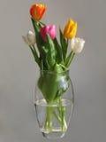 mångfärgade tulpan för grupp Royaltyfri Fotografi