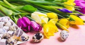 Mångfärgade tulpan och påskliljablommor baner lyckliga easter Royaltyfria Bilder