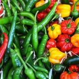 Mångfärgade variationer av peppar på en grönsak står Royaltyfri Foto