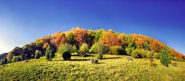 mångfärgat skogädelträ Royaltyfri Fotografi