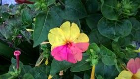 Mångfald i en blommanatur i färg royaltyfri foto