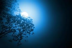 månsken royaltyfri foto